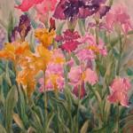 Irises at Schedel Gardens
