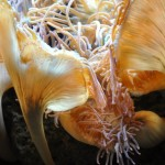Martha Lee Huepenbecker, Underwater Beauty, Photography
