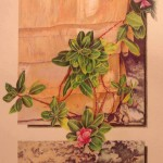 Mary Mossing Krueger, Seed Sown On the Rocky Soil, Colored Pencil