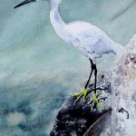 Kay Kocher, Bird on the Rocks, watercolor